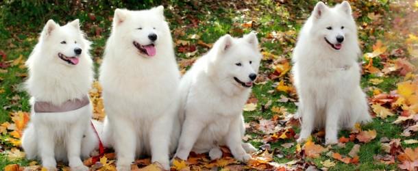 Šuo – geriausias žmogaus draugas. Su juo linksma, jis visada ištikimas ir niekada neįskaudins